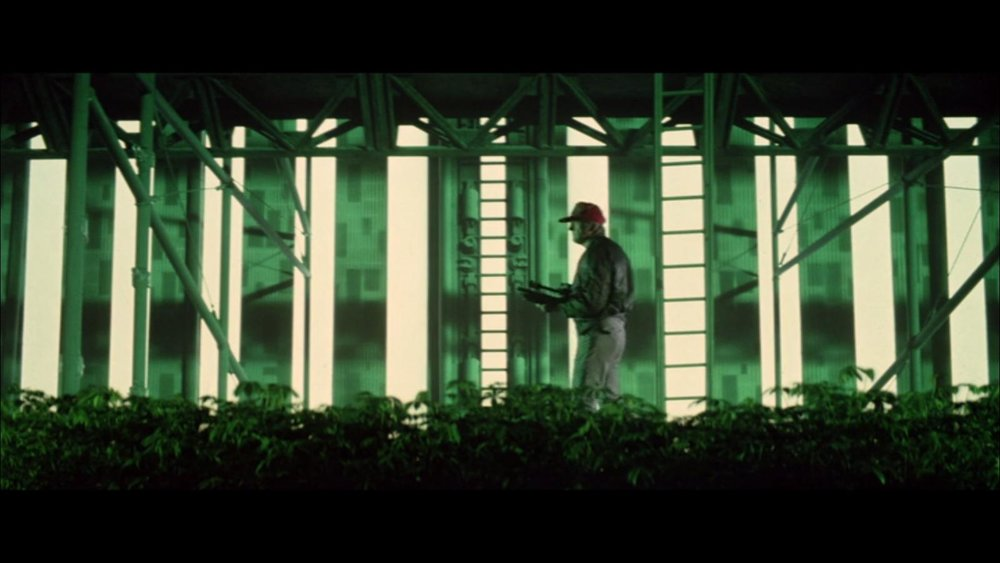 A shot from the amazingly cool greenhouse scene.