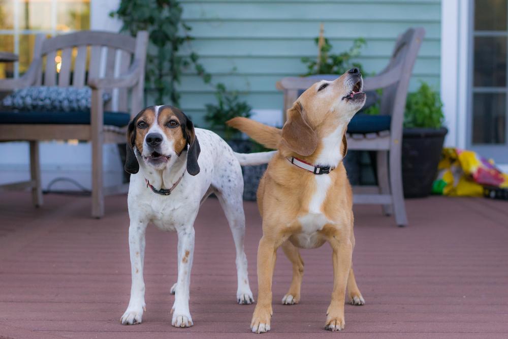 Gus & Lulu