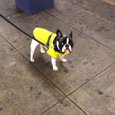 Buster is the type of doggo who should pride himself on his all-element-preparedness, but ends up longing for the summer sunshine despite his sunny raincoat. He's a four legged reminder that sometimes the rain blows - just like that cheeky saying on those bright umbrellas Dry Bar provides on days like this!