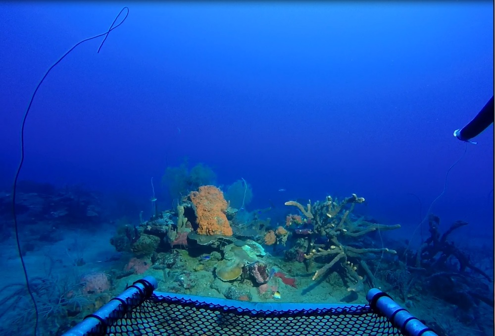 Branching sponges, plate coral, and coral whips at 250ft.