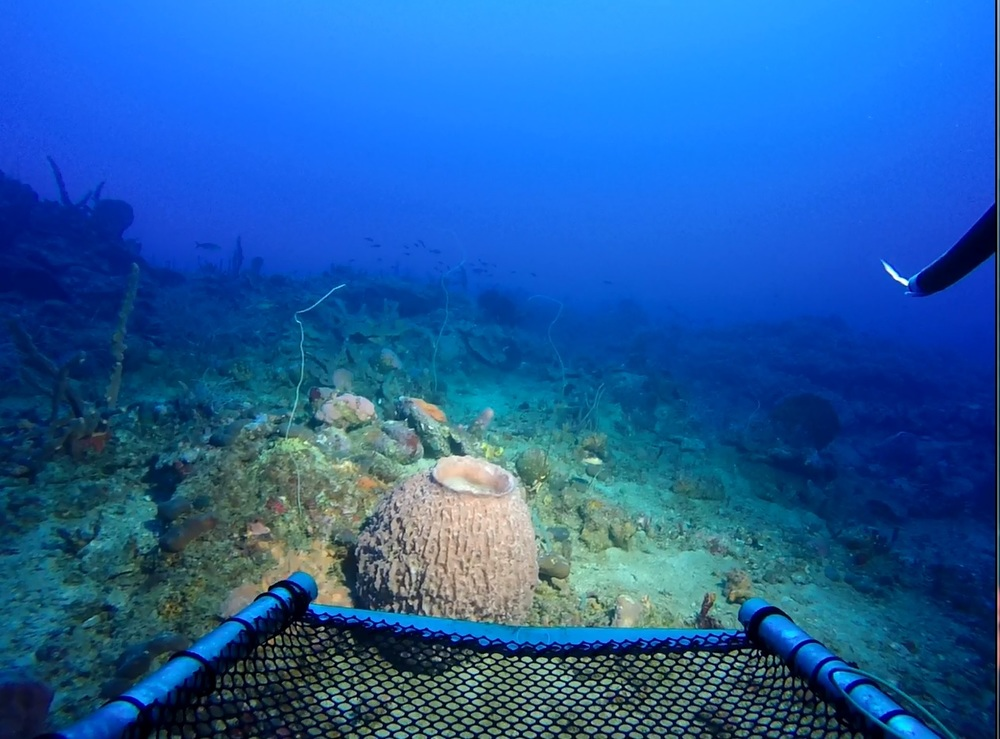 Barrel and tube sponge habitat at 200ft.