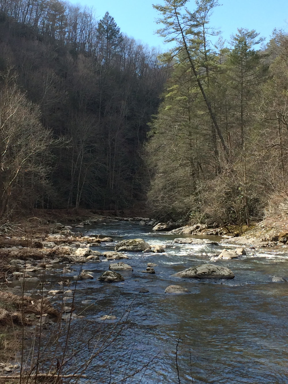 The Laurel River (near Hot Springs, NC)