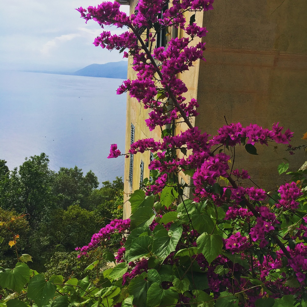 reasons to visit punta chiappa camogli