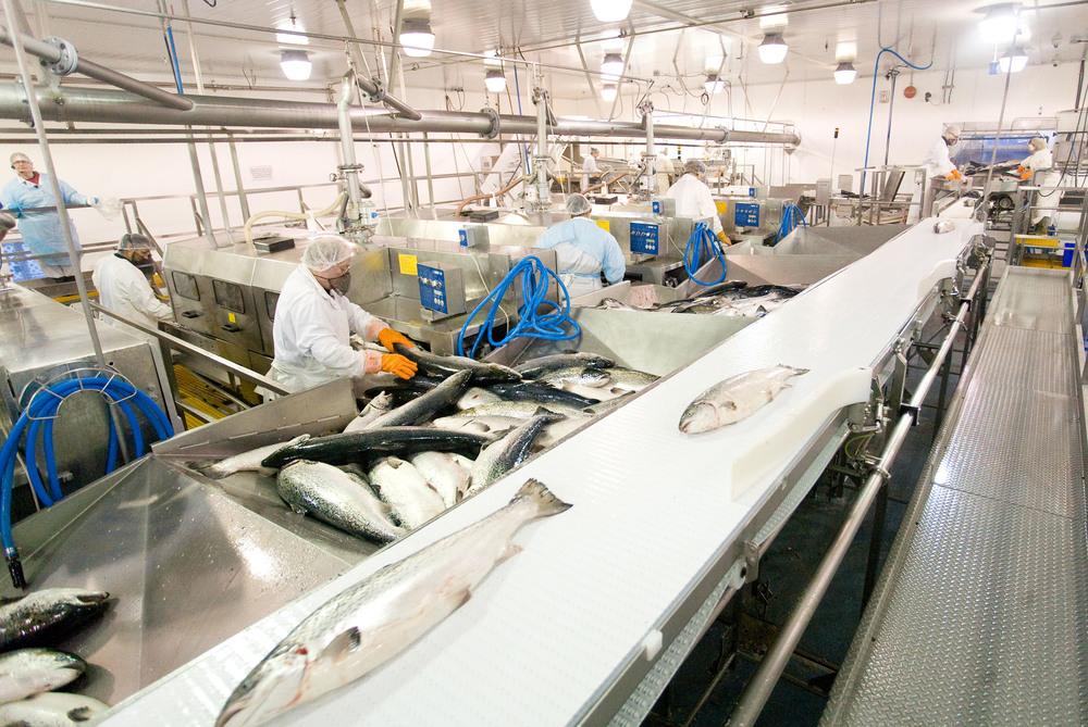MHC Port Hardy processing plant.jpg
