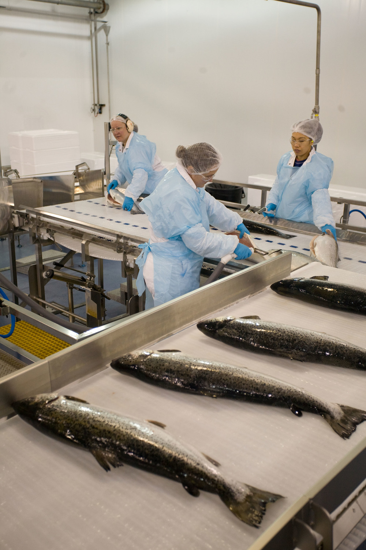 MHC Port Hardy processing plant 2.jpg