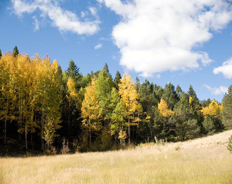 Colorado_Aspens_Blair_Designs_04.jpg