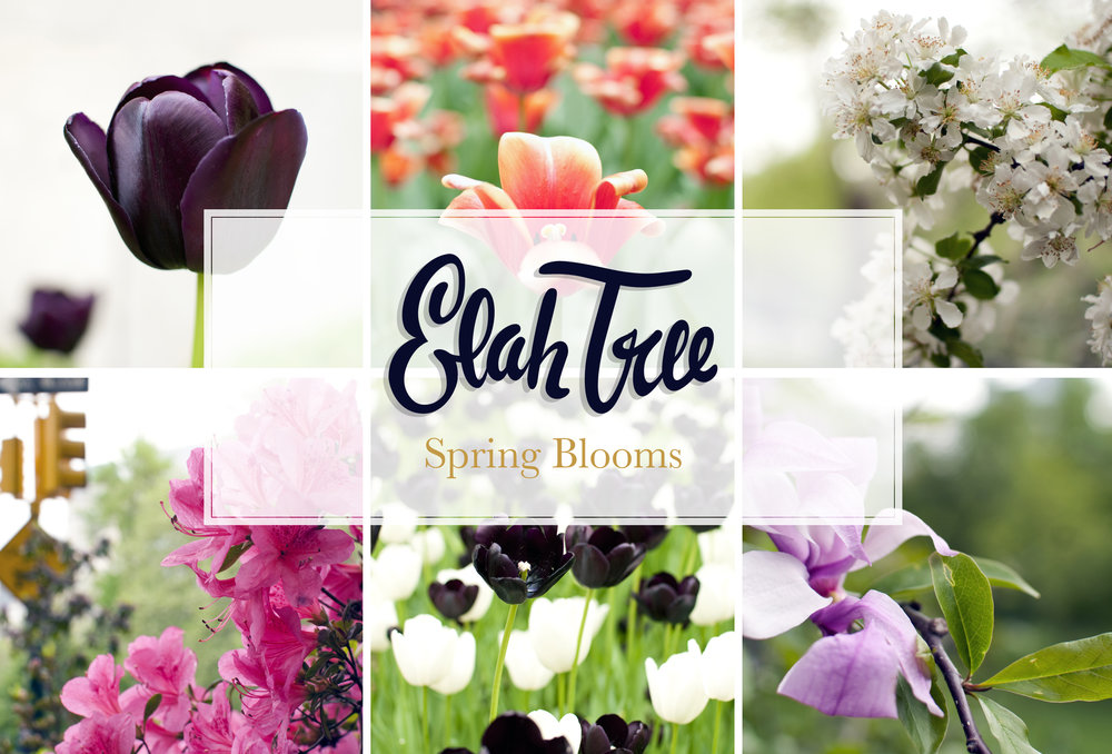 elah-tree-styled-stock-photography-spring-blooms-01.jpg