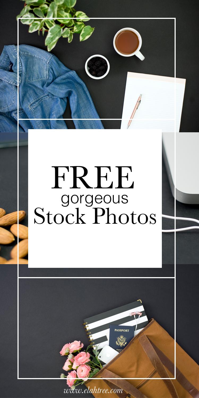 elah-tree-styled-stock-photos-free