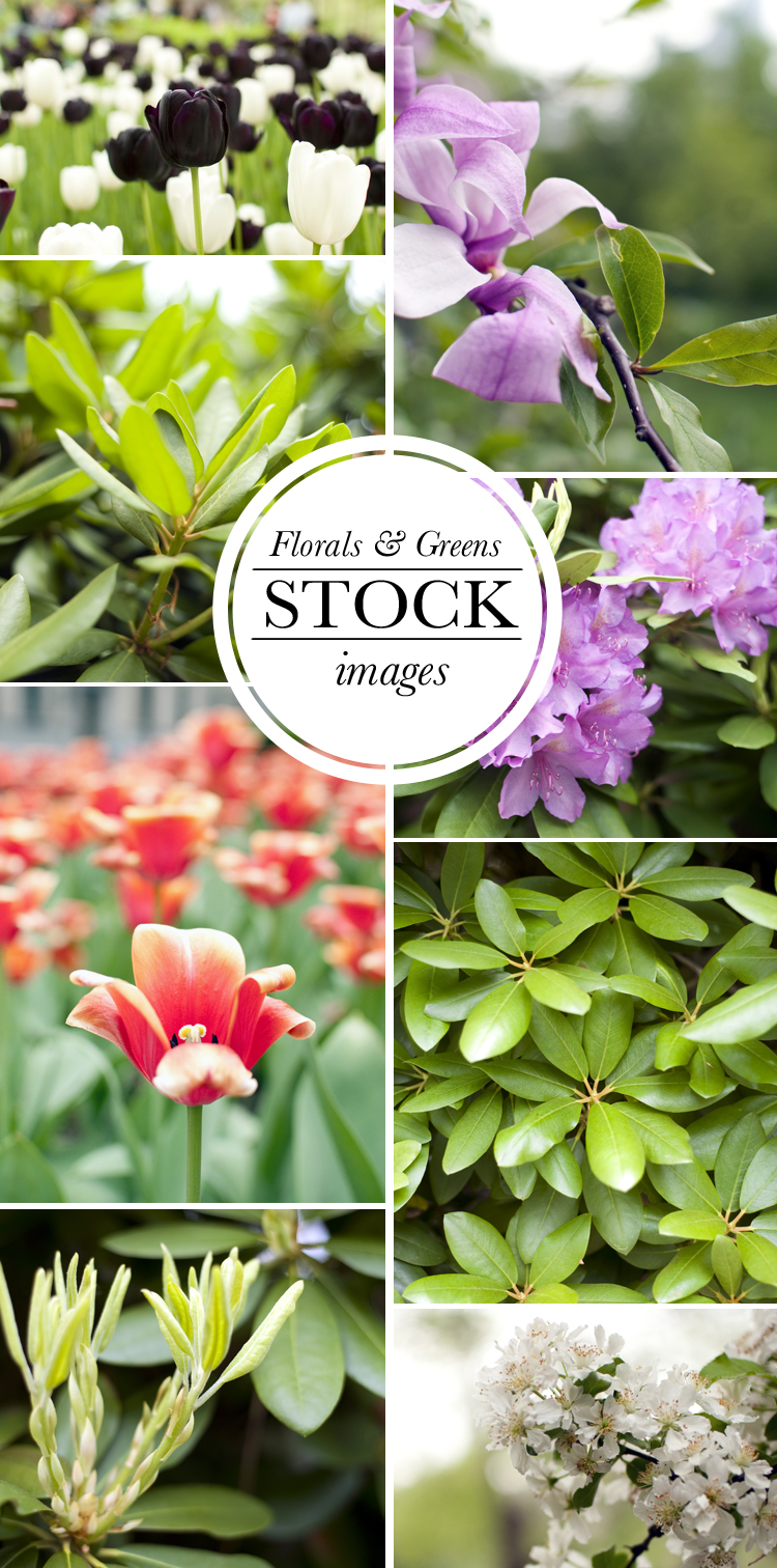 Florals and Greens Stock Photo Images