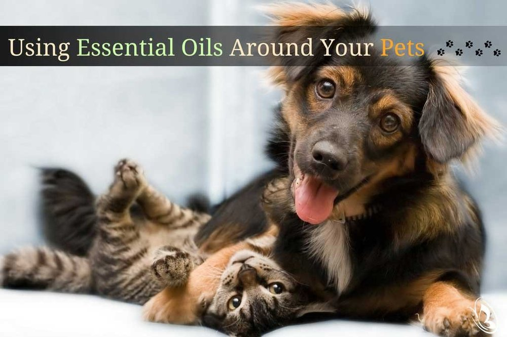 Using-Essential-Oils-Around-Your-Pets--Blog-Cover-1024x682-by-Organic-Aromas_1024x1024.jpg