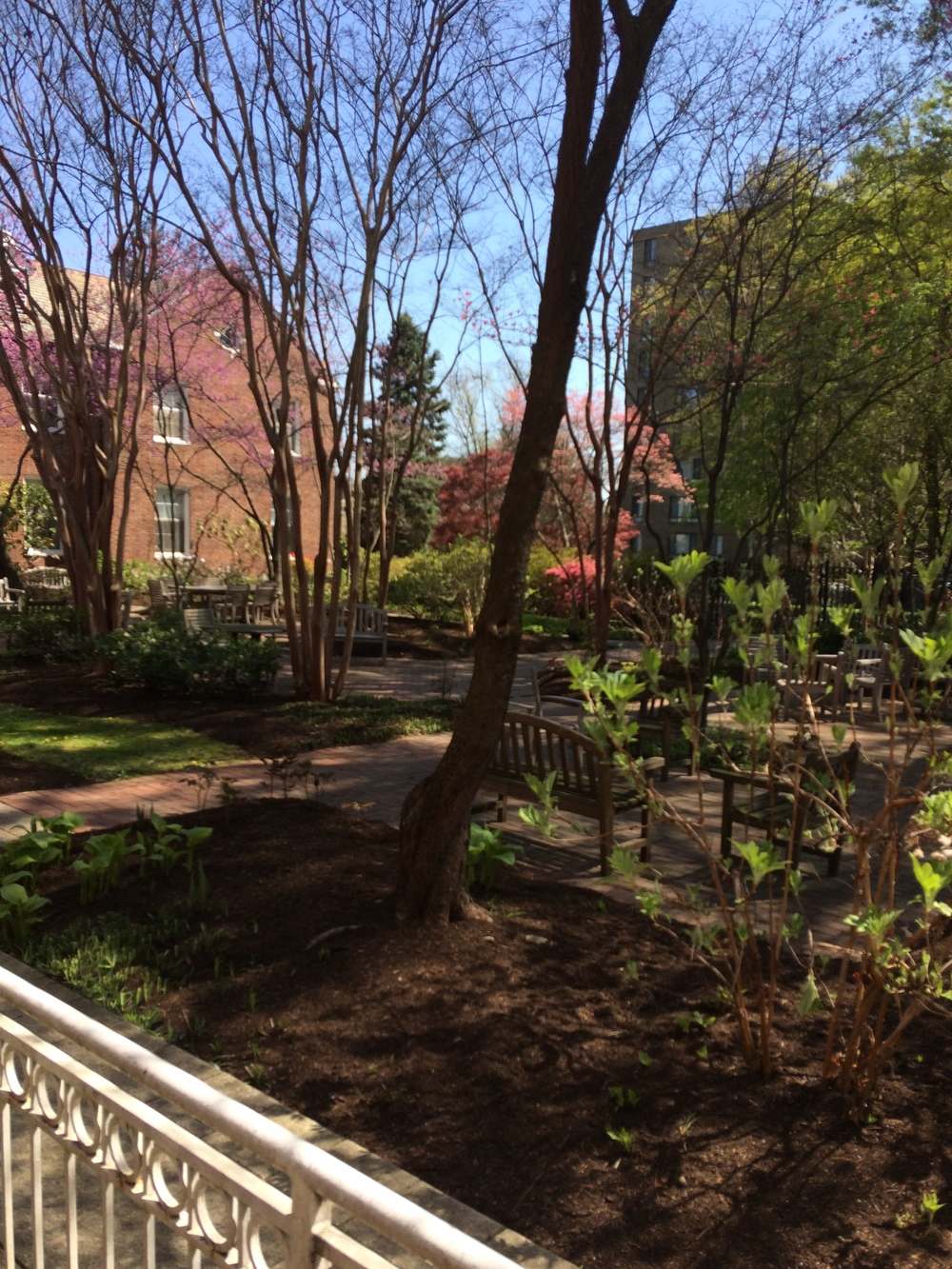 The courtyard at Forest Hills of DC
