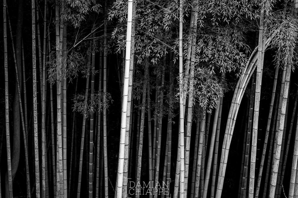Fushimi-ku, 2016.-