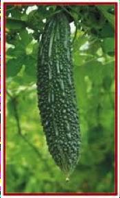 bitter-gourd-nutrition