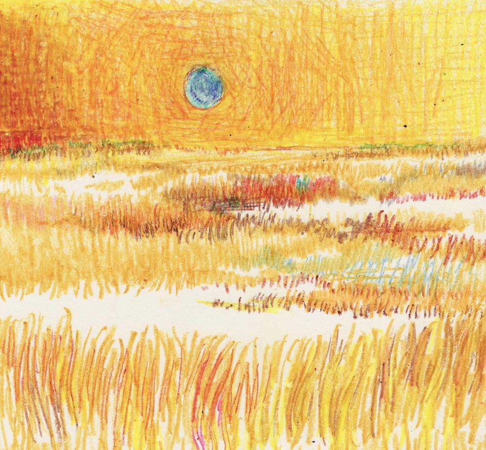 florida landscape 6.JPG