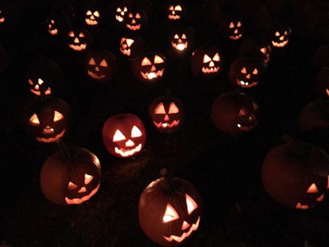 HALLOWEEN 🎃  #halloween #thegreatjackolanternblaze #jackolantern