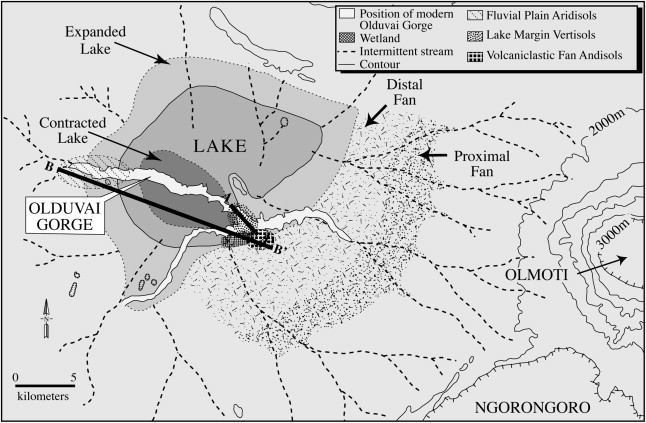 Olduvai Gorge incises into the eastern margin of the Serengeti Plain. Paleo-Lake Olduvai expanded and contracted throughout the Pleistocene and was a saline-alkaline lake unsuitable for drinking. So why were the hominins occupying this landscape? This is the question I've been working on since 2010.