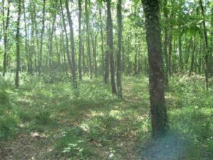 Surroundingoakwoods.jpg.w300h225.jpg