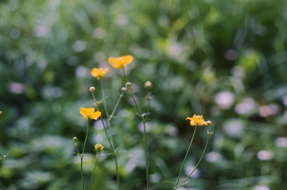 Buttercups on 35mm outside the abandoned old people's home where I did a casting.