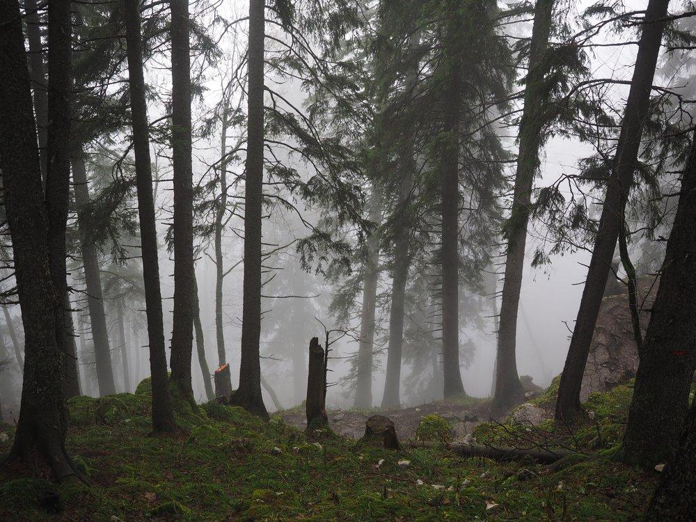 tree-forest-wilderness-fog-mist-sunlight-722002-pxhere.com (1).jpg