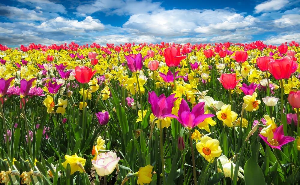 Social Media: Perpetual Spring
