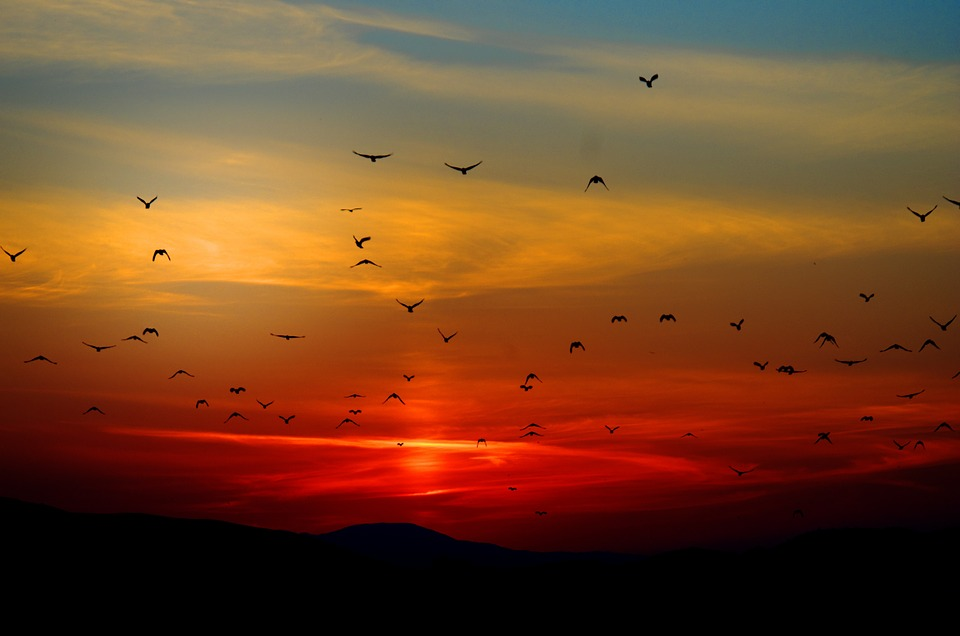 seagulls2.jpg