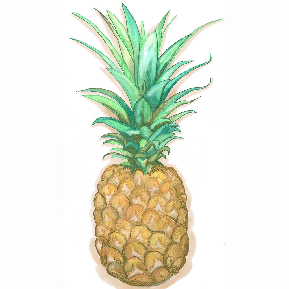 - pineapple illustration -
