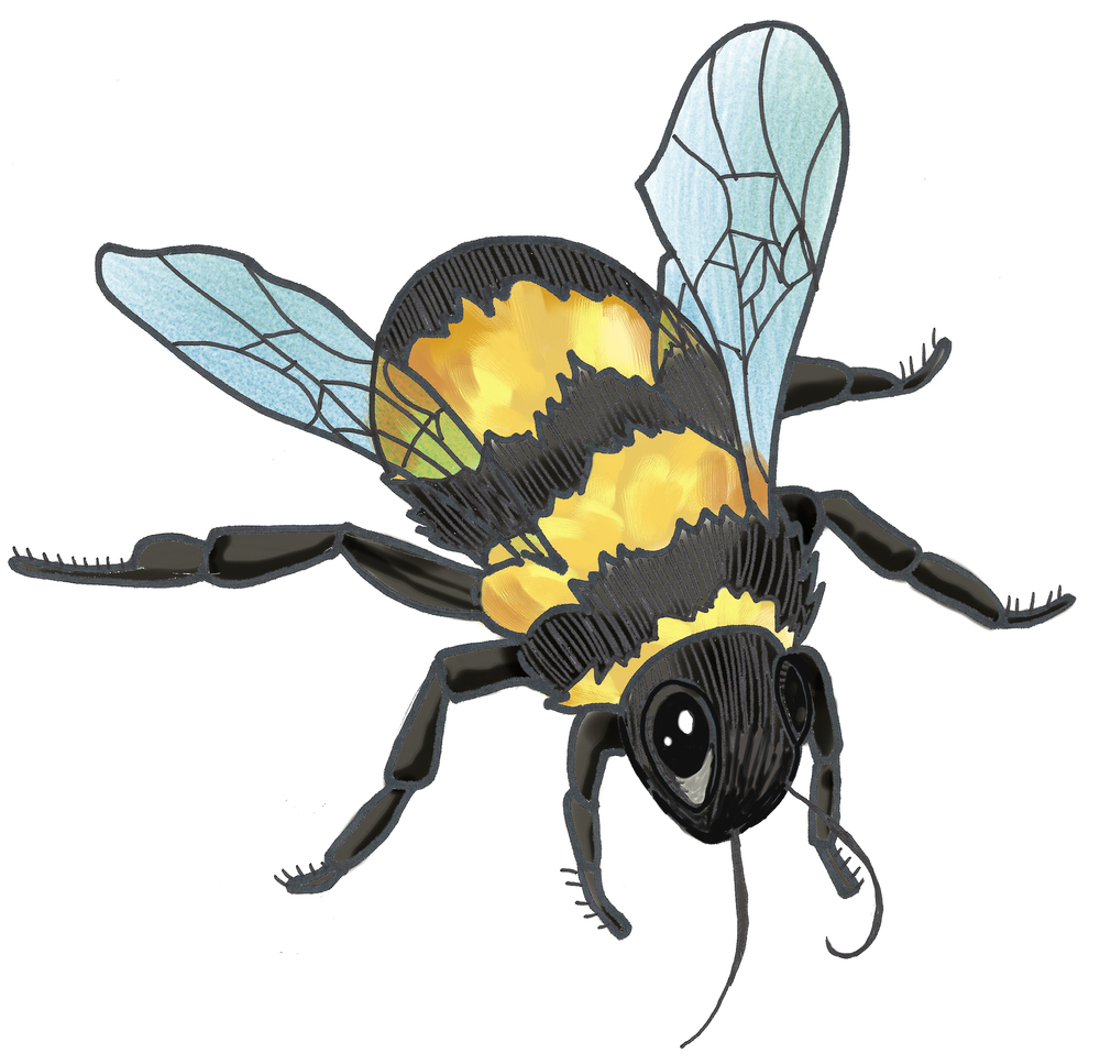 - bee illustration 1 -