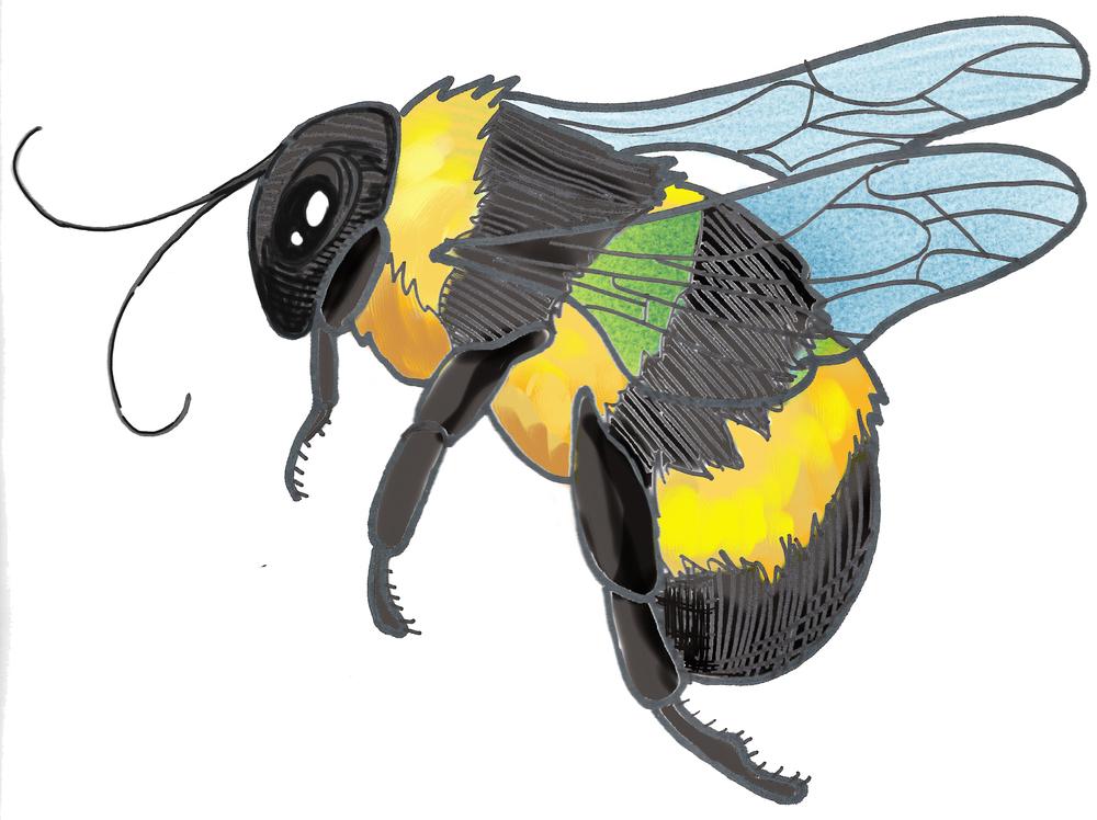 - bee illustration 2 -