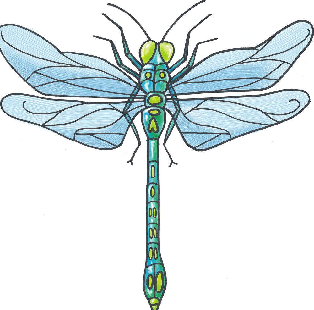 - dragonfly illustration 1 -