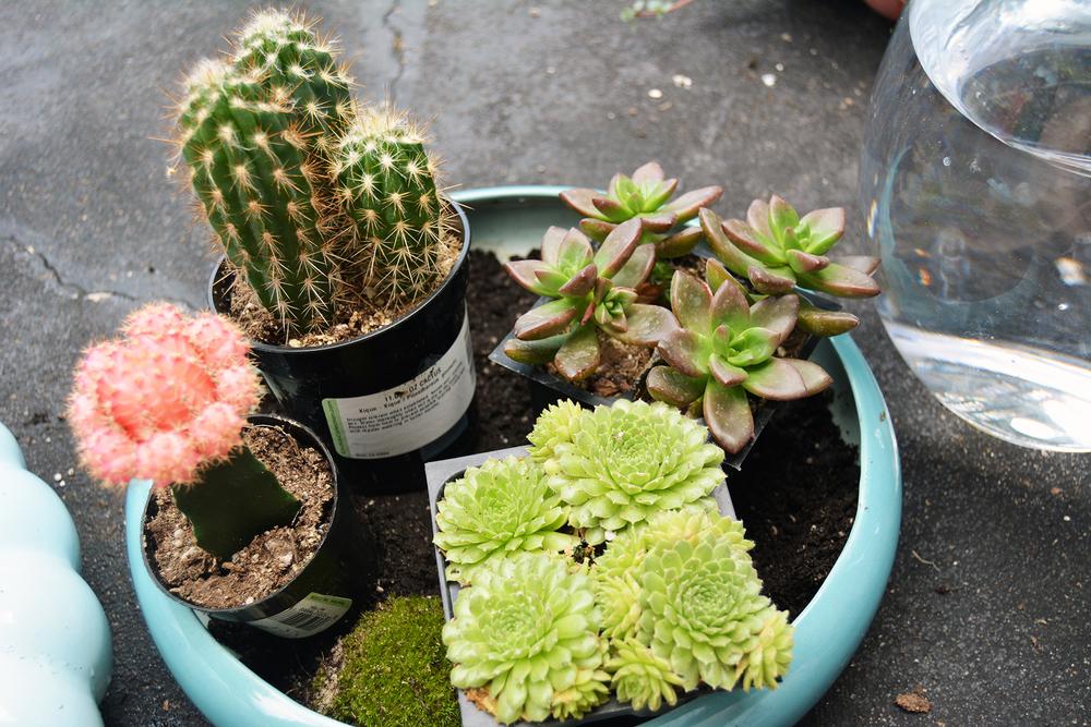 cactus in dish.jpg