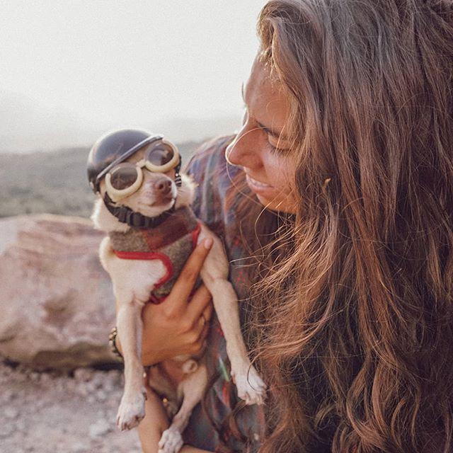 😎= @mrbrunobuttcheeks .. .. .. .. .. .. #dogsthathike #chihuahua #raiseyourvibration #vibratehigher #campeveryday  #optoutside #hikemore #happyhiker #hikingadventures #campvibes #idhikethat #modernwild  #visitnh #ilovenh #alifealive #hikenh #dogsofinstagram #lifeofadventure #overlander #liveadventurously #roamtocreate #rei1440project  #adventureisoutthere #thegreatoutdoors #goatworthy #findyourpark  #travelstoke