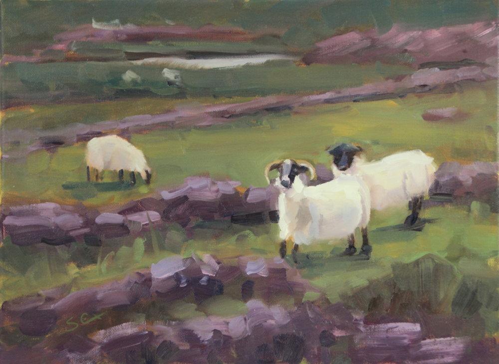 Scottish Sheep-12x16.JPG