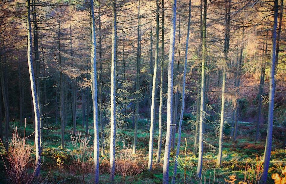 sunlight trees copy.jpg