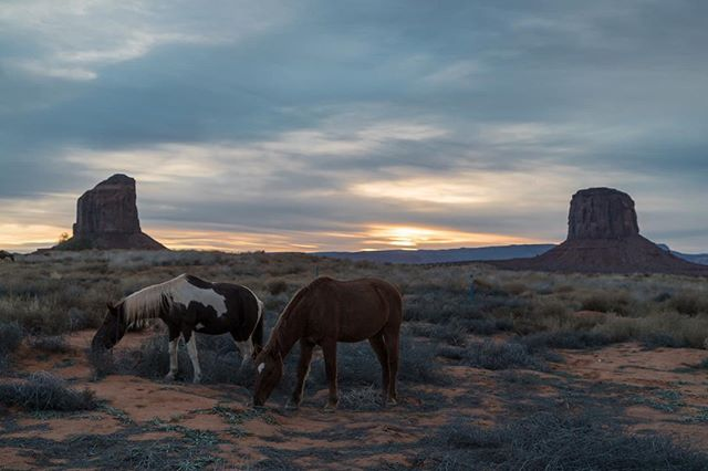 Sunset in Monument Valley #paintshopla #mustangs #monumentvalley #landscape #desert #outdoors #offthegrid #exploretocreate 📸: @dylan.catherina