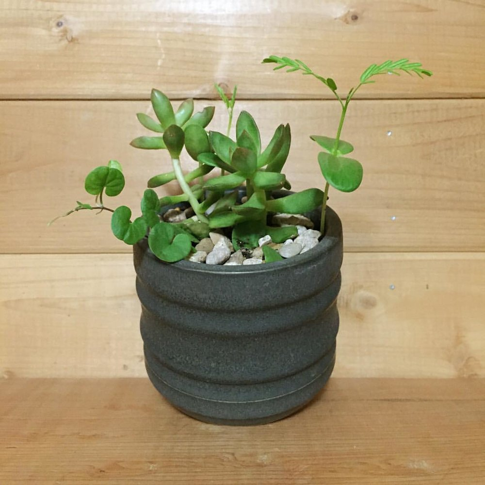 AWF succulents.jpg