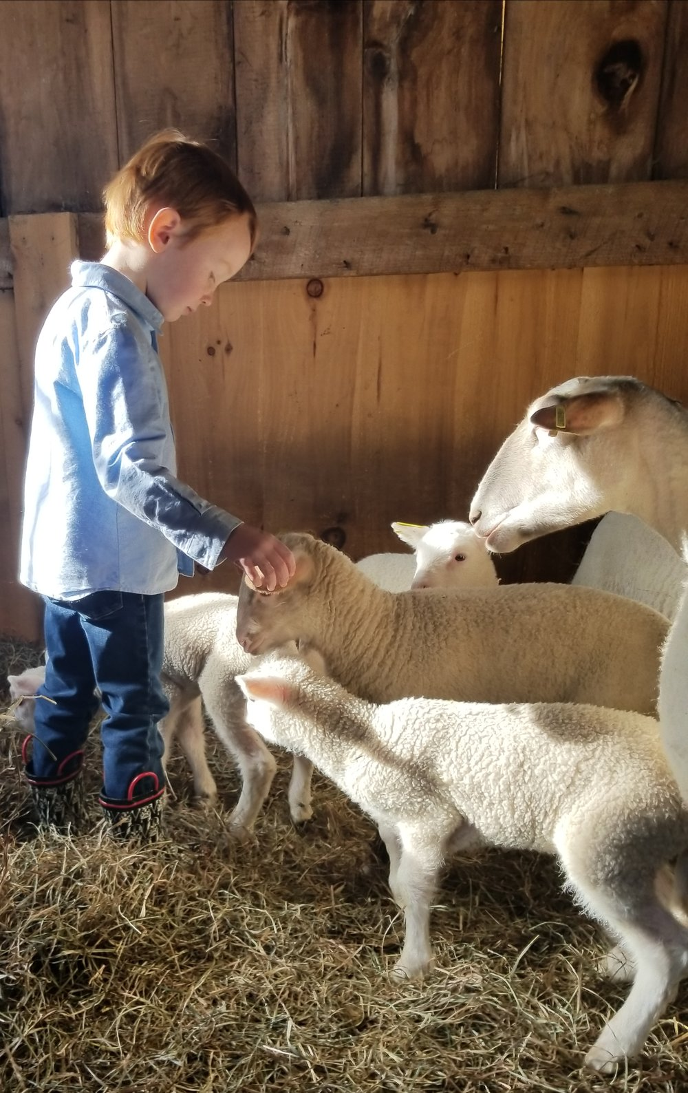 kid and lambs2.jpg