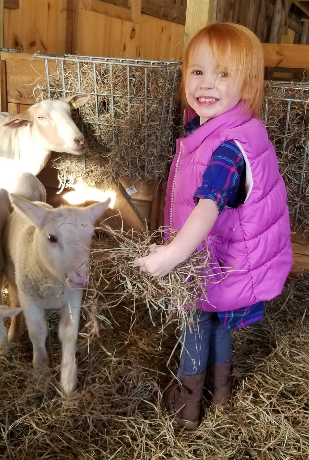 kid and lambs.jpg