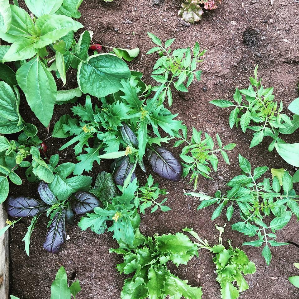 Beetroot Sauvage garden.jpg