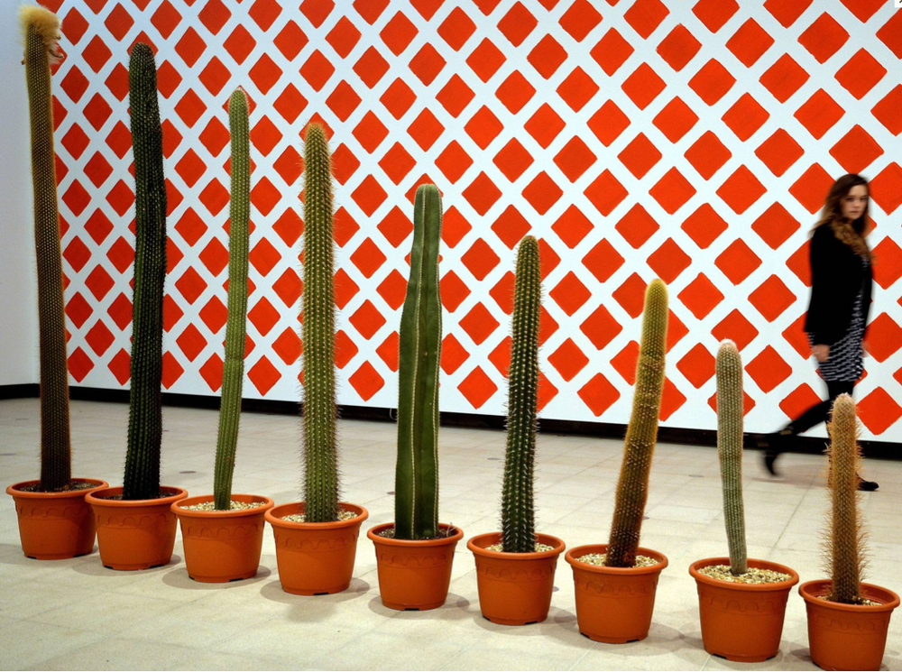 martin-creed-row-of-ever-smaller-cactus-plants.png