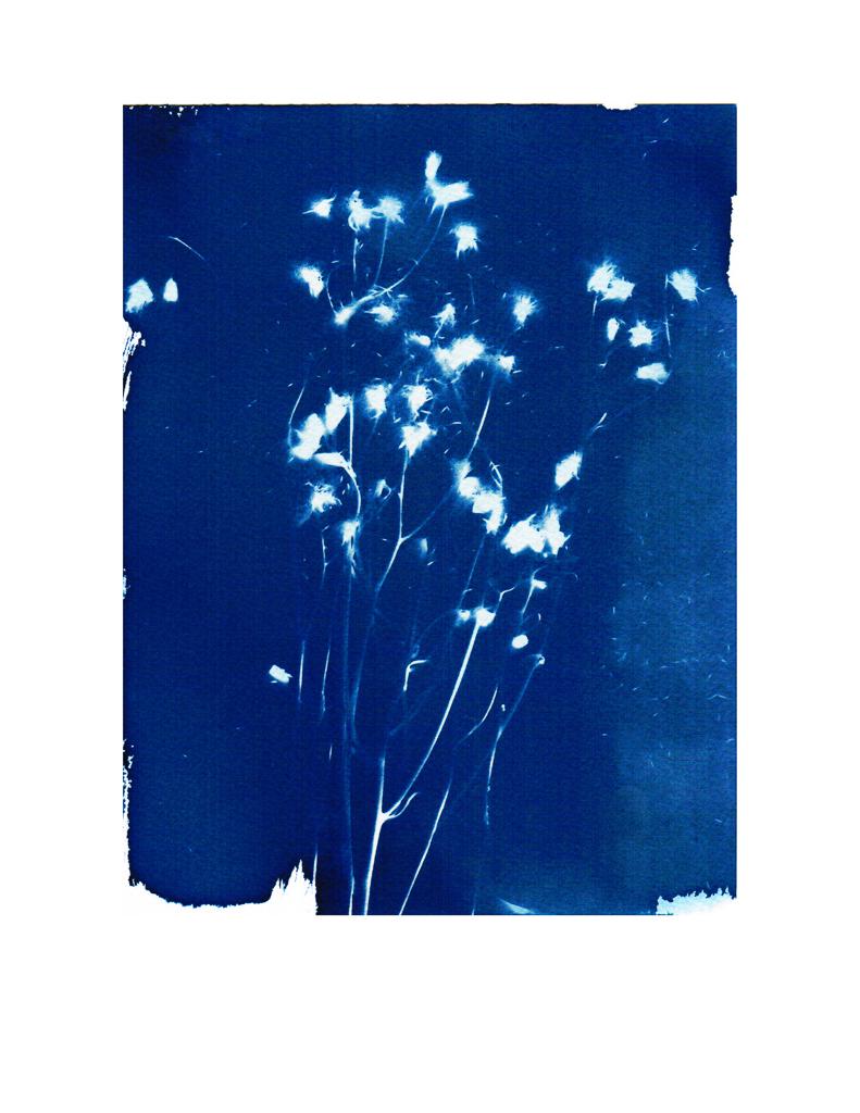 """Artemisia"" © Tama Baldwin, 2013"