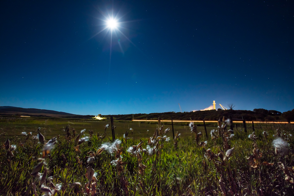 Milkweed, Moonlight, Coal Plant