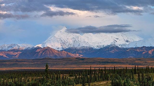 "This may well be one of the most amazing places I have laid my head down to sleep.  Mount Foraker (center left) clocks in at 17,400 feet (5,304 meters) and Denali, the highest mountain in North America (20 ,165 feet/ 6,190 m)is visible here too as a mysterious white glow in the top center of the photograph! The ""great one"" was all wrapped up in its typical meteorological drama this particular night, but we didn't care. We were snuggled in down listening to rain drizzling on the tent.  Cold can't touch you when you have just dined on campfire sourdough pancakes packed with blueberries we picked  on our afternoon hike. #happyplace #denalinationalpark #alaska # landscape photography #discover_earth #autumn #instagood #exploretocreate #instalike#moodygrams #adventureculture #exklusive_shot #naturegram"