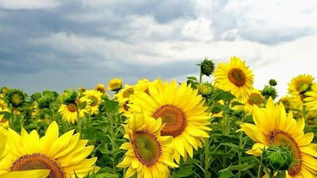 Sunny_0009_11018831_618518388249984_6919125341820381199_n.jpg