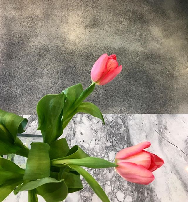 Spring has sprung in the office regardless of the crazy weather #tulips #flowers #marble #office #interiordesign #springtime #northvancouver #naturevsman