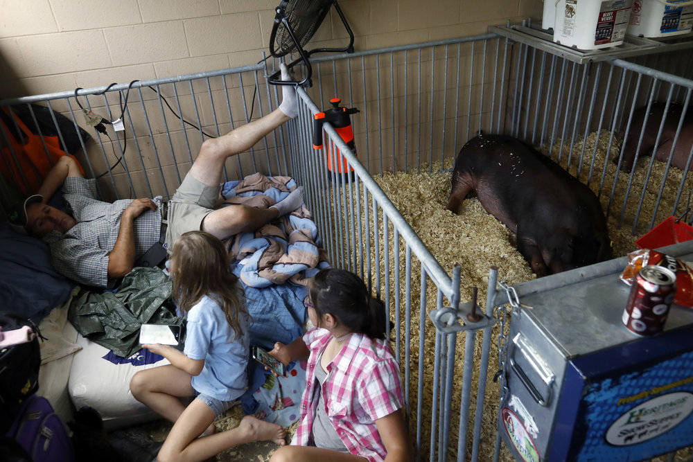 Andrew Troy of Durst, left, rests in the shade with his daughters Samantha, 8, center and Lydia, 11, near their show Duroc Gilt swine July 28, 2018, at the Ohio State Fair in Columbus. Among sundry attractions, the fair features rides, food, agricultural expos, as well as arts and crafts.
