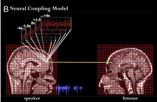 neural coupling.png