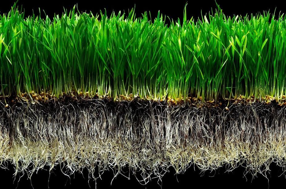 Wheat Grass Shot Vegan Restaurant