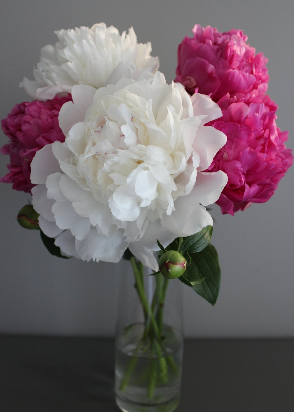 "The white peonies with flecks of crimson pictured here are from my grandparent's garden:  "" Festiva Maxima "" variety. The dark pink was from a family friend's garden and she didn't remember the variety..possibly a "" Big Ben "" variety"