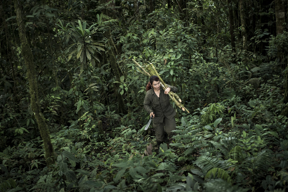 """October 2015. North Caquetá. Yurluey, 32, has just cut some little truck she will use to construct her """"caleta"""", the place where she will sleep. She is in charge of a political mass organization group in the Teofilo Forero Column. She joined the FARC at 14. She went only three months to school because there was no school near the family farm. She tells she learnt with the guerrilla a little bit of everything. Two of her sisters are into the guerilla, like her uncles. Yurluei comes from a peasant family in El Pato region. In the 70's and 80's, her family was displaced several times by the army. More later, her brother was murdered and her family thinks it was the police."""