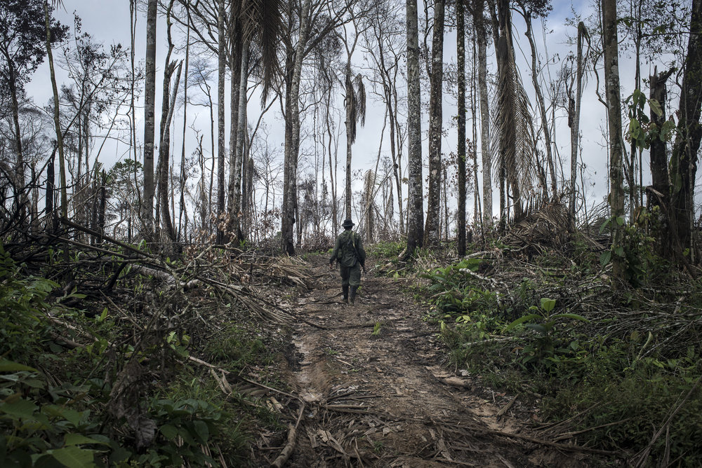 """May 2015, South Caquetá. On the way to the camp through part of the rainforest recently burnt by peasants to clear space for a pastureland. This part of Caquetá is still at the front line of the agrarian colonization of the country. There is no paved road and it's very difficult to get out harvest. For that reason, the peasants chose to breed cattle for meat and milk instead of heavy agricultural product like cassava. For a long time, coca leaf production was their main source of income, also for the FARC-EP that collect the so-called """"revolutionary tax"""". But with the recent changes in the market, the peasants start to switch to other sources of income. The land recovered from the rainforest is increasingly used for breeding cattle, and the deforestation is accelerating."""